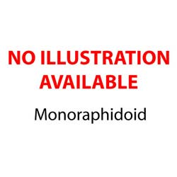 monoraphidioid
